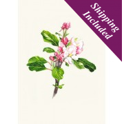 Greeting Card (Apple Blossom Sunset)