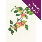 Greeting Card (Apple Laxtons)