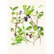 Greeting Card (Blueberry)